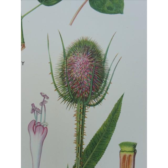 Vintage Botanical Poster - Image 4 of 4