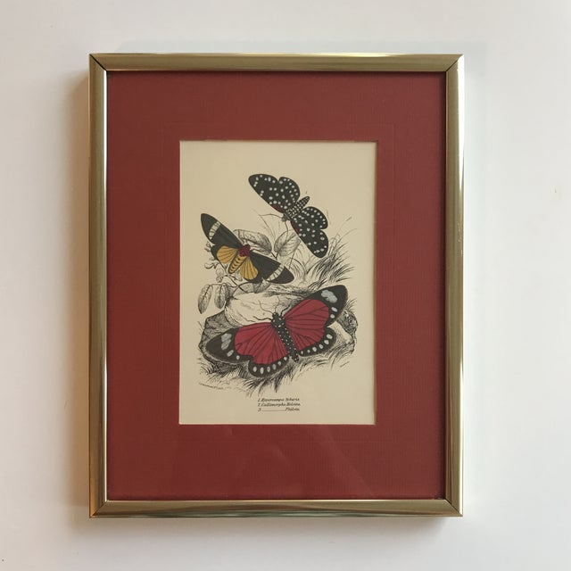Pretty vintage butterfly art print, with red mat and brass frame. Would make an excellent addition to a gallery wall or be...