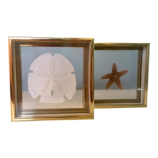 Sea-Life Framed in Brass - a Pair