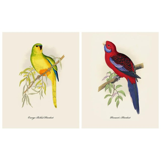 Engraving 1884 Alexander Francis Lydon, Parrot Reproduction Set of 12, N1 For Sale - Image 7 of 11