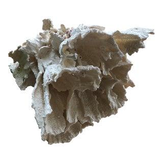 Vintage White Coral Specimen