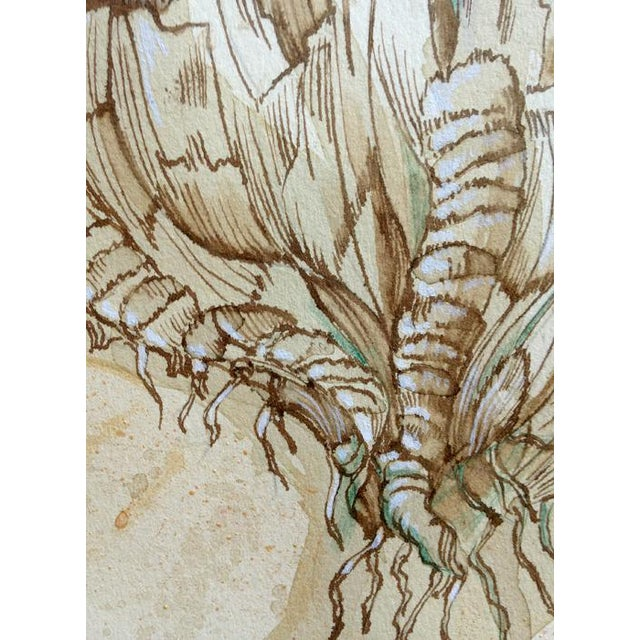 Natural History Botanical Pen and Ink Drawing, Plant Life 2 by Kathleen Ney For Sale - Image 4 of 7