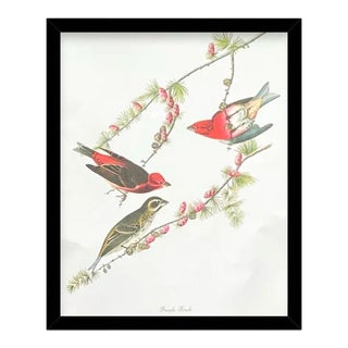 Custom Black Wood Frame of Authentic Vintage John James Audubon Purple Finch Bird & Botanical Print For Sale