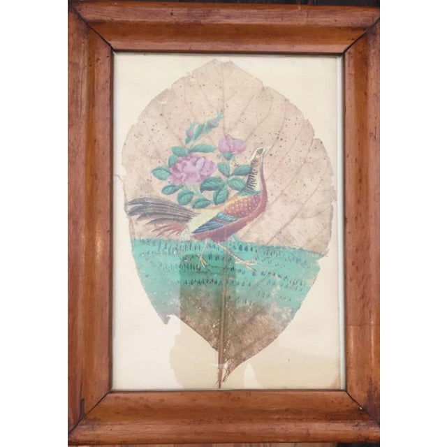 Lovely small depiction of a peacock painted with oils on a tobacco leaf. Delicate with fine details