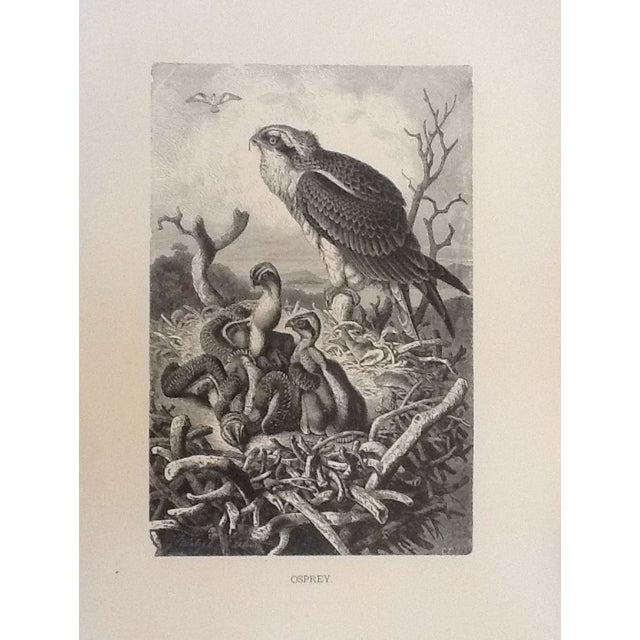 Antique Mutzel Book Plate Etching - Image 1 of 2