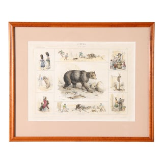 Antique 19th Century French Lithograph of a Bear For Sale