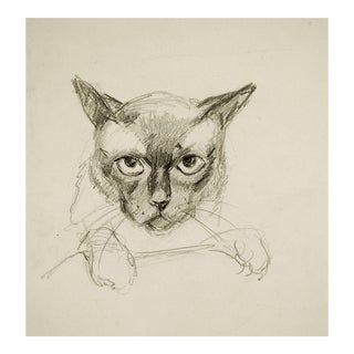 George Baer Pencil Study of Cat Drawing For Sale