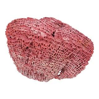 Natural Red Coral Specimen