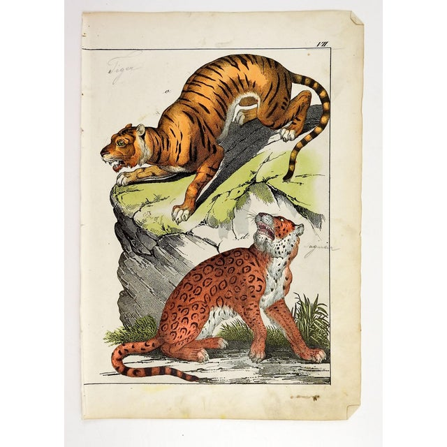 Circa 1840's hand colored woodcut of a tiger and jaguar. Unmarked, age toning, spots, pencil notations edge wear.