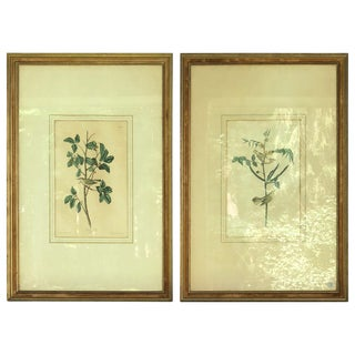 Two Audubon Framed Bird Engravings, Circa 1827, Tennessee & Children's Warbler For Sale
