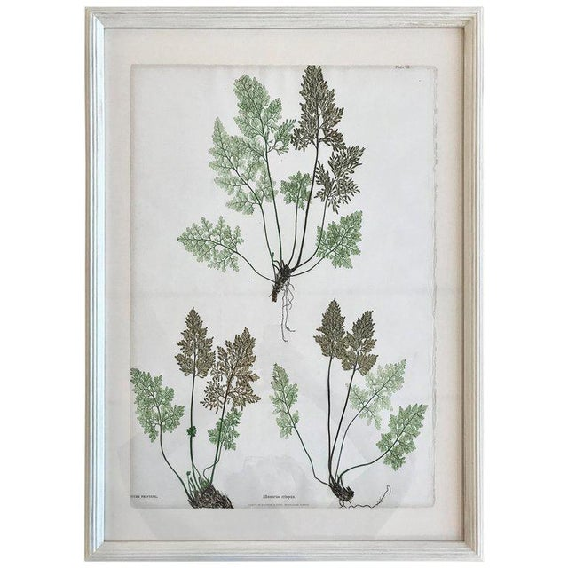 19th Century Bradbury & Evans Nature Printed Fern Print For Sale In Boston - Image 6 of 6