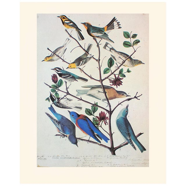 A stunning large vintage Cottage Style reproduction of the original lithographic print of Townsend's Warbler, Arctic...
