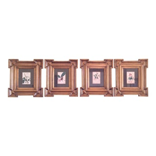 Botanical Prints in Regency Style Gold Frames - Set of 4 For Sale