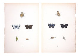 Image of Lithograph Reproduction Prints