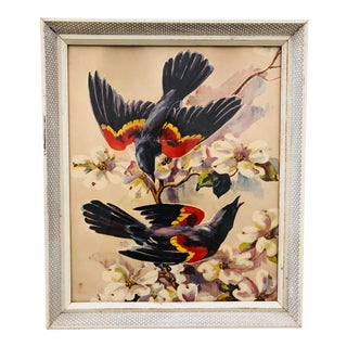 Vintage Bird Print in Frame For Sale