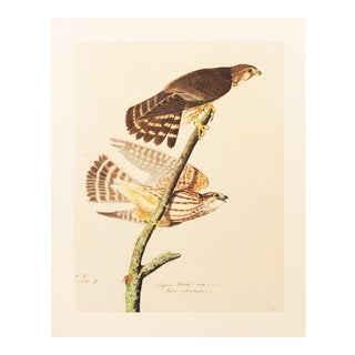 1966 Pigeon Hawk by John James Audubon For Sale