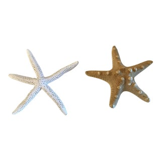Natural Starfish - a Pair For Sale