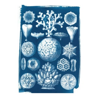 Limited Edition, Geometric Coral Drawing by Ernst Haeckel, Cyanotype Print on Watercolor Paper For Sale