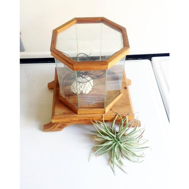 Wood and Glass Octagonal Terrarium - Image 3 of 5