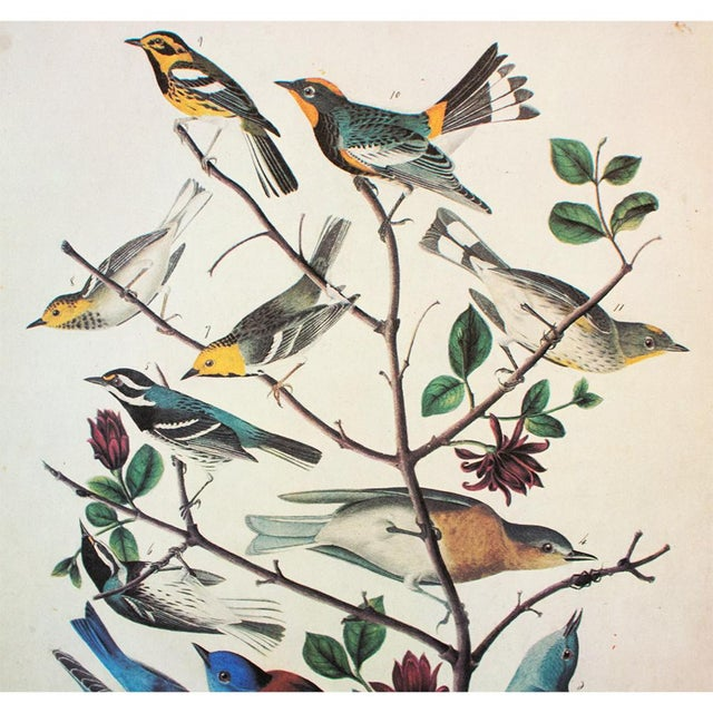 American American Bluebirds and Townsend's Warbler by Audubon, Vintage Cottage Print For Sale - Image 3 of 8