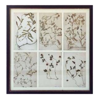 Swedish Herbal Pressed Botanical Framed Under Glass, Circa 1940 For Sale
