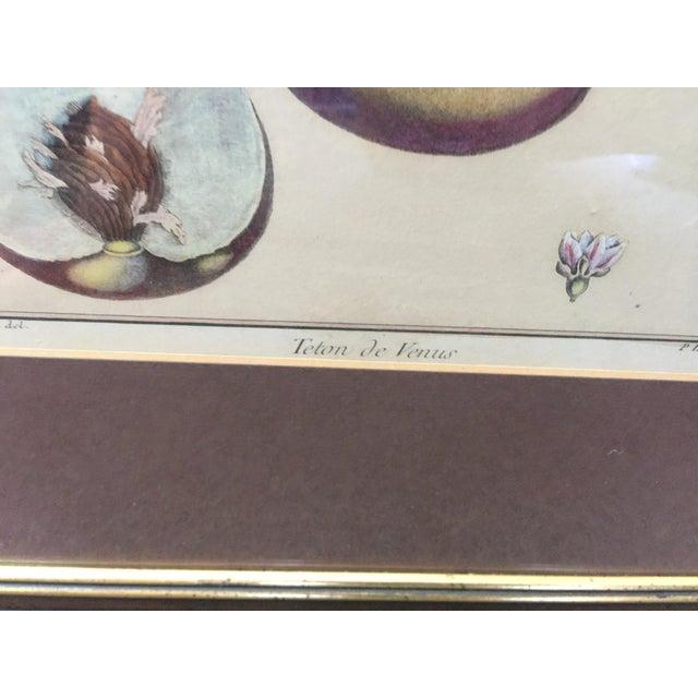 Glass Antique Botanical Prints - Set of 3 For Sale - Image 7 of 9