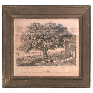 The Great Elm Tree of Shackamaxon Print by William Penn Historical For Sale