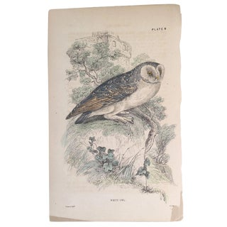 19th Century Bechstein White Owl Engraving