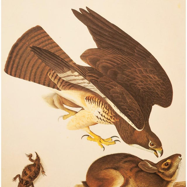 American Swaison's Hawk, Marsh Hare and Horned Agarma by Audubon, Vintage Cottage Print For Sale - Image 3 of 9