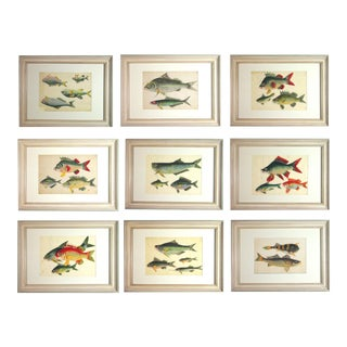 Chinese Watercolours of Fish on Pith Paper - Set of 9 For Sale