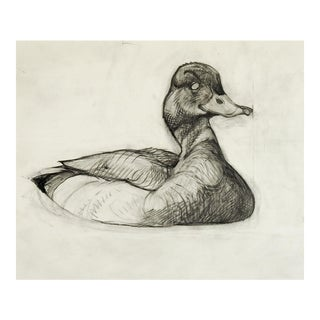 Vintage Mallard Duck Pencil Study Drawing For Sale