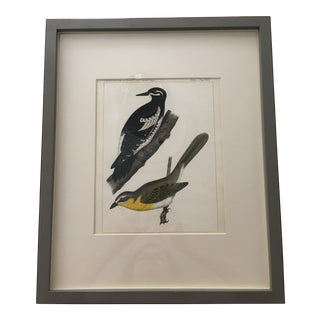 Vintage Mid-Century Bird Print For Sale