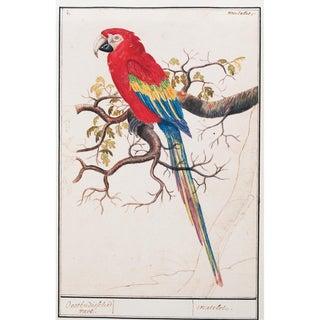 1590s Scarlet Macaw by Anselmus Boëtius De Boodt, Small Reproduction Print For Sale