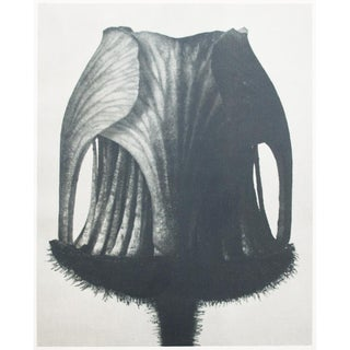 1935 Contemporary Two-Sided Photogravure N11-12 by Karl Blossfeldt