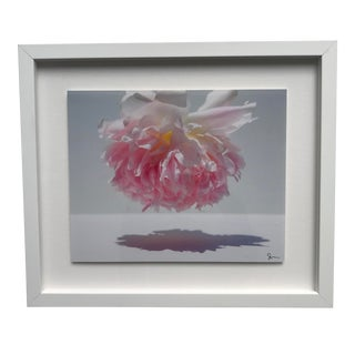 """""""Pink Puff"""" Contemporary Botanical Photograph by Susan Johnson, Framed For Sale"""