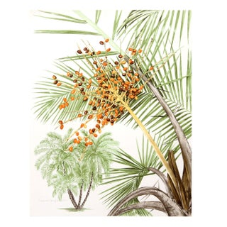 Marion Sheehan - Phoenix Palm Lithograph