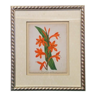 Tropical Watsonia Floral Art Print For Sale