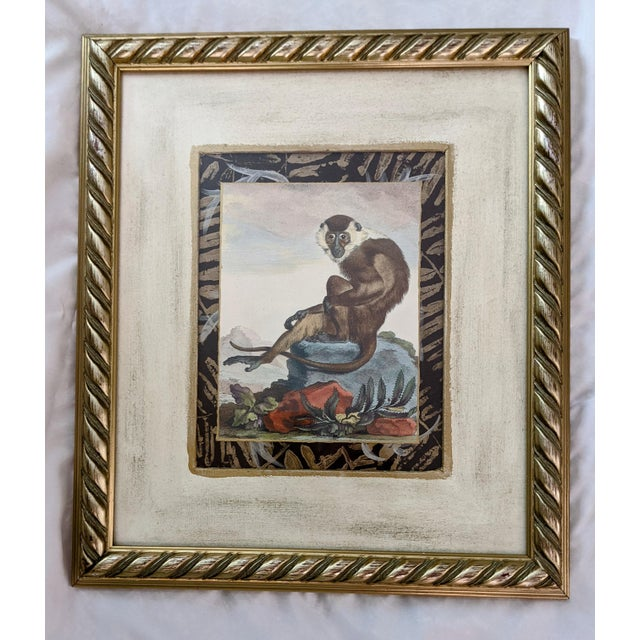 Hollywood Regency Late 20th Century Hand-Colored Engravings of Monkeys After G. Buffon, Framed - Set of 4 For Sale - Image 3 of 13