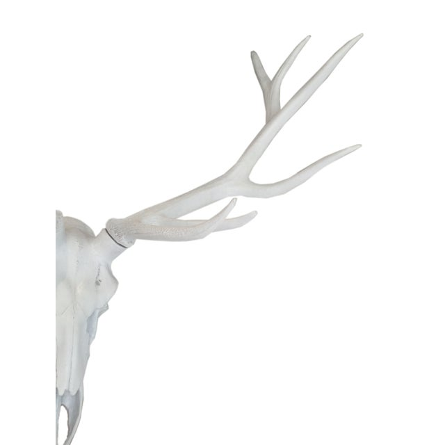 2010s Resin Stag Skull Wall Decor, White For Sale - Image 5 of 6