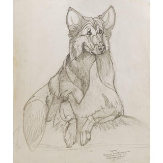 Portrait of Collie For Sale