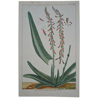 "Rare 18th Century Hand Colored Botanical Engraving Plate LXVI From ""Jardin D'Eden"" by Pierre Joseph Buchoz For Sale"