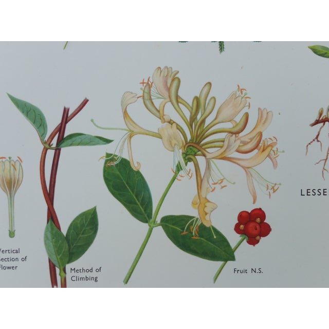 Vintage Botanical Poster - Image 3 of 4