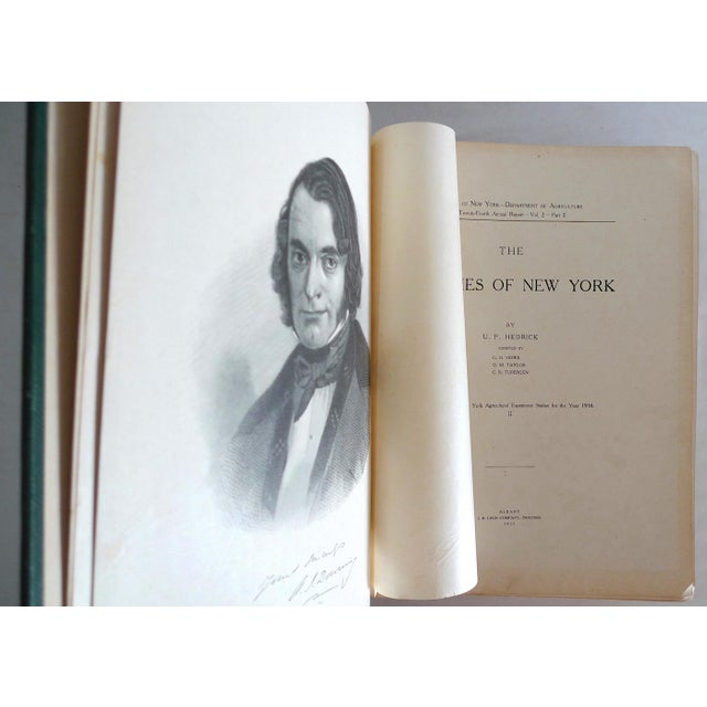 Traditional 1910s Large Illustrated Book, Hendrick's the Peaches of New York, 1st Edition For Sale - Image 3 of 6