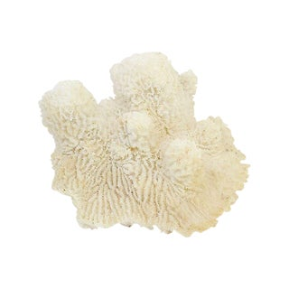 Natural Coral Specimen For Sale