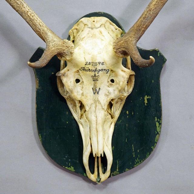 Farmhouse Antique Black Forest Deer Trophy From Salem - Germany 1876 For Sale - Image 3 of 6