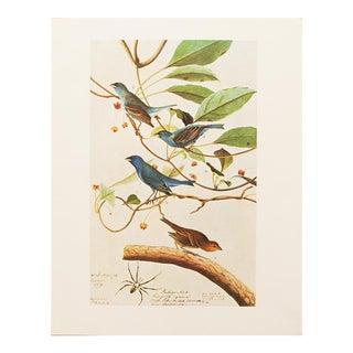 1966 Audubon Indigo Bird Lithograph