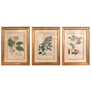 Group of Three Foliage Engravings by Nathaniel Wallich For Sale