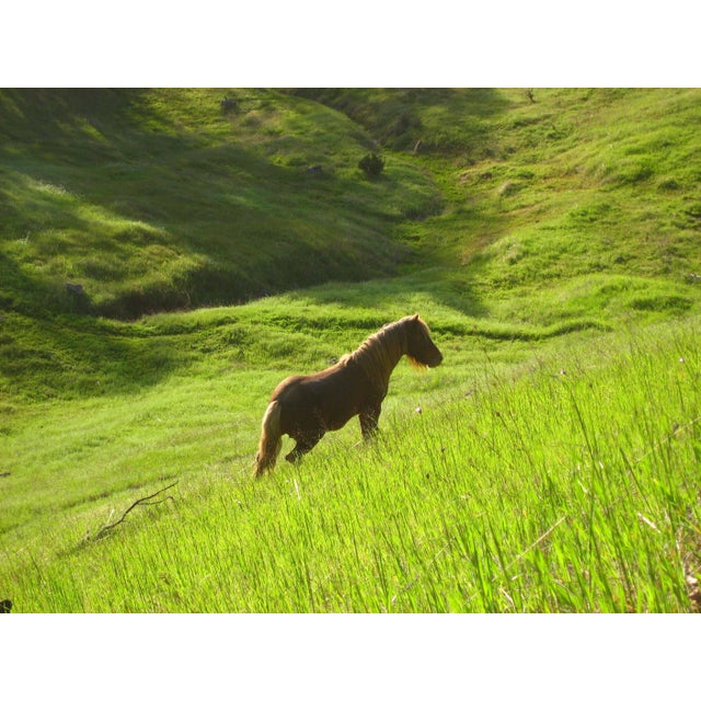 "2010s Gaétan Caron ""Stallion in Green Meadow"" Mendocino, Ca 2010 For Sale - Image 5 of 5"