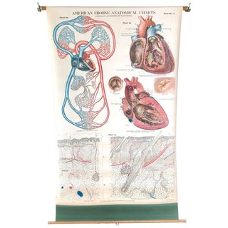 Frohse Anatomical Chart by a.j. Nystrom, Plate No. 4, Circulatory System, 1918 For Sale