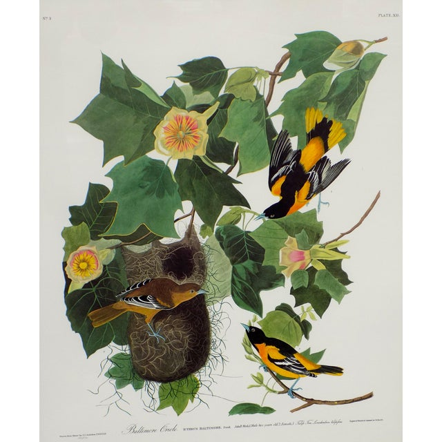 Traditional Audubon's Baltimore Orioles Framed Print For Sale - Image 3 of 5